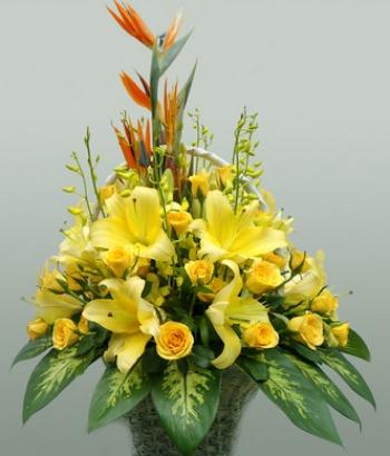 hoa sinh nhat hsn010