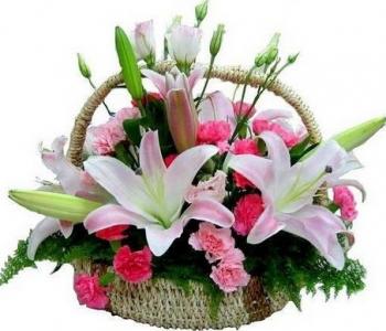 hoa sinh nhat hsn015