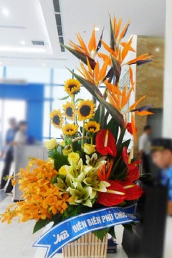 hoa sinh nhat hsn017