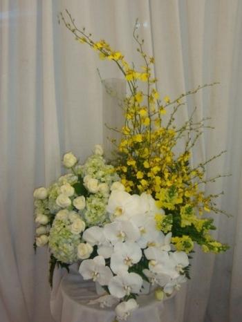 hoa sinh nhat hsn023