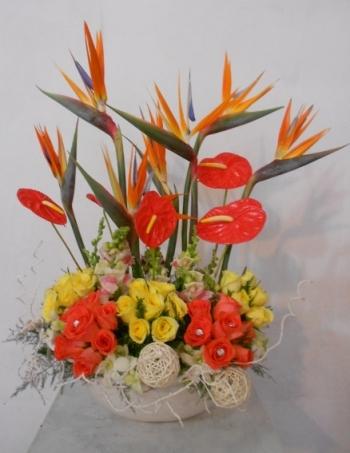 hoa sinh nhat hsn024