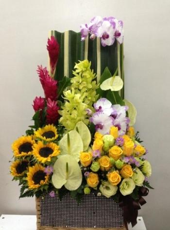 hoa sinh nhat hsn026
