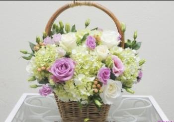 hoa sinh nhat hsn028