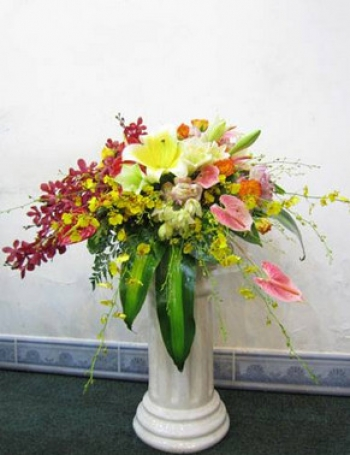 hoa sinh nhat hsn034
