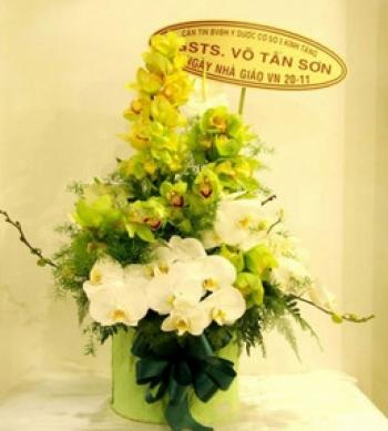 hoa sinh nhat hsn035