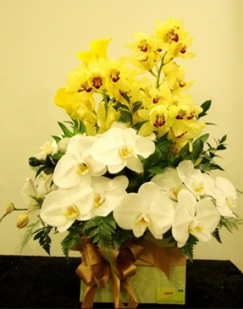 hoa sinh nhat hsn036