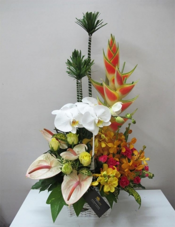 hoa sinh nhat hsn043