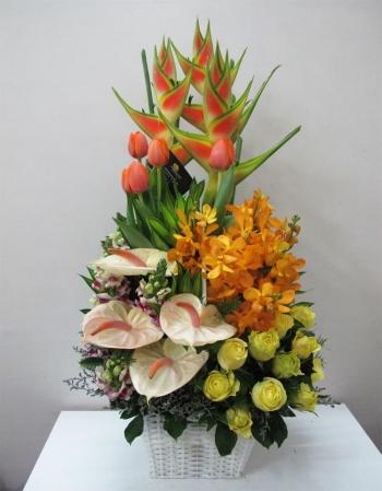 hoa sinh nhat hsn044