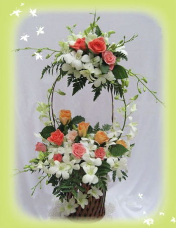 hoa sinh nhat hsn052