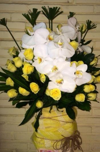 hoa sinh nhat hsn078