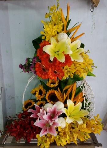 hoa sinh nhat hsn082