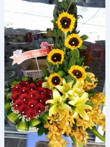 hoa sinh nhat hsn085