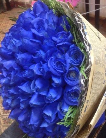 hoa ngay le hnl095