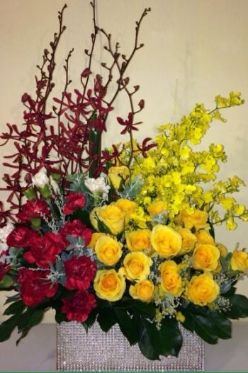 hoa sinh nhat hsn108