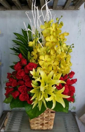 hoa sinh nhat hsn117