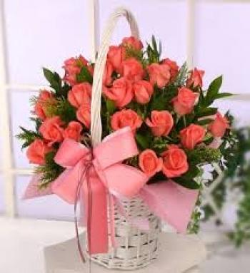 hoa ngay le hnl155