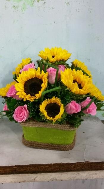 hoa ngay le hnl157