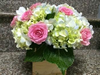 hoa ngay le hnl185