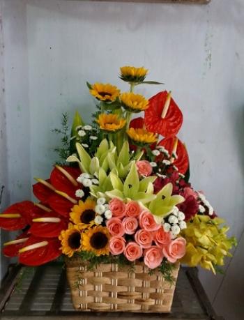 hoa ngay le hnl190