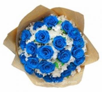 hoa ngay le hnl205