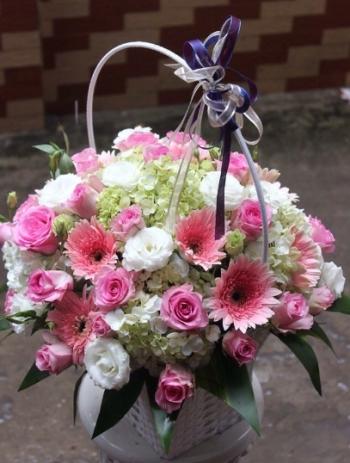 hoa ngay le hnl222